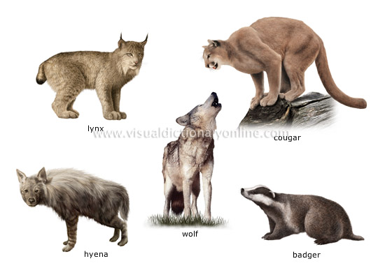 examples of carnivorous mammals [3]