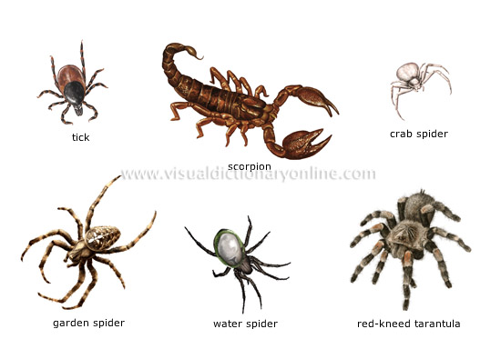 ANIMAL KINGDOM :: INSECTS AND ARACHNIDS :: EXAMPLES OF ...  ANIMAL KINGDOM ...