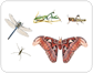 examples of insects [1]