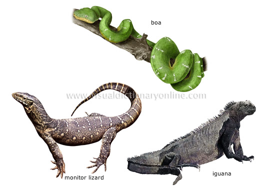 examples of reptiles [3]