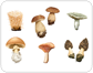 mushrooms [1]