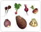 root vegetables [2]