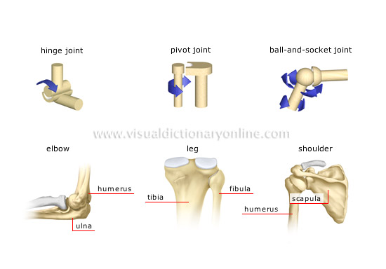 types of synovial joints [1]