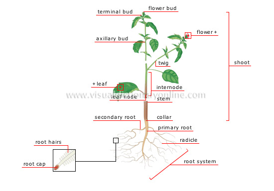 structure of a plant