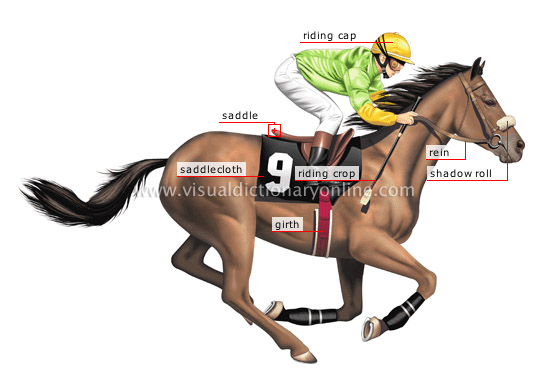 A Absolutely Horse Racing System jockey
